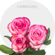 Carrousel Roses Wholesale