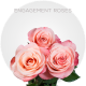 Engagement Roses Wholesale