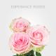Esperance Roses 60cm