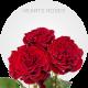 Hearts Roses   Bellevueroses.com