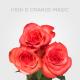 High & Magic Orange