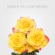 High&Yellow