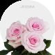 Jessika Roses Wholesale