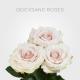 Quicksand 60cm On Sale