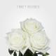 Tibet Roses from Cayambe-Ecuador