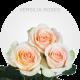 Verisilia Roses
