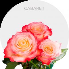 Cabaret Roses Wholesale