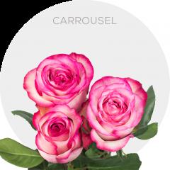 Carrousel Roses Wholesale