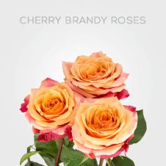 Box Cherry Brandy 40cm (125 St)