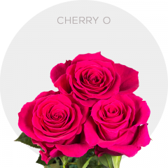 CHERRY O ROSES
