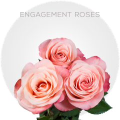 Engagement Roses Wholesale