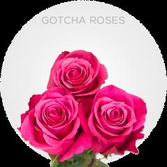 Gotcha Roses