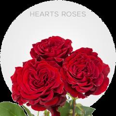 Hearts Roses | Bellevueroses.com