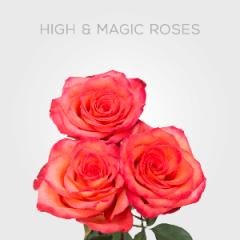 Box High & Magic 40cm (125 St)