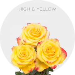 High & Yellow Roses