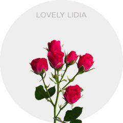Lovely Lidia Roses