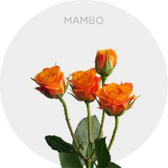 Mambo Roses