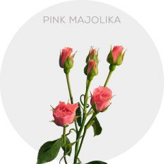 Pink Majolika Roses