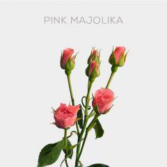 Box Pink Majolika mix 40-60cm (100 st)