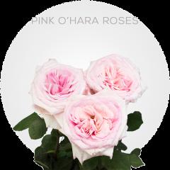 Pink O'Hara Roses