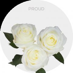 Proud Roses