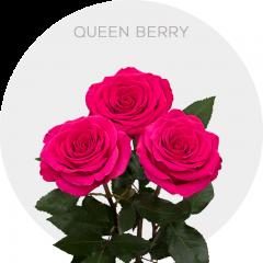 Queen Berry Roses