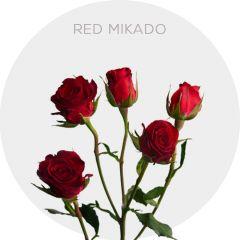 Red Mikado Roses