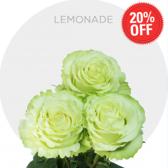 Lemonade Roses 20% OFF