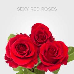 Box Sexy Red 40cm (125 St)