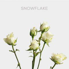Box Snowflake 40-60cm (100 st)