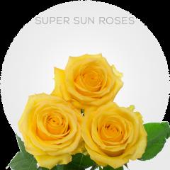 Super Sun Roses