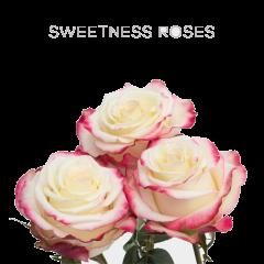 Sweetness Roses Wholesale