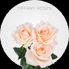 Tiffany Roses Wholesale
