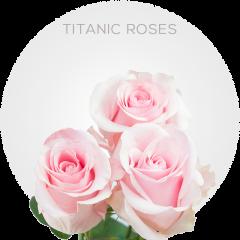 Titanic Roses