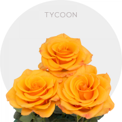 Tycoon Roses