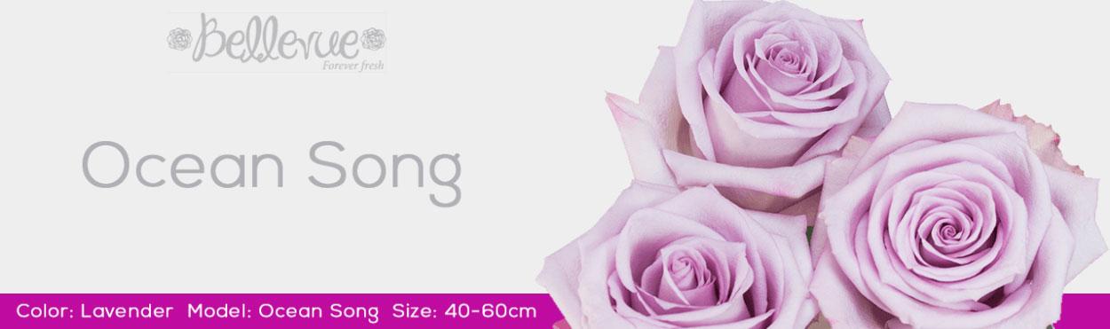 Lavender Wedding Bellevueroses