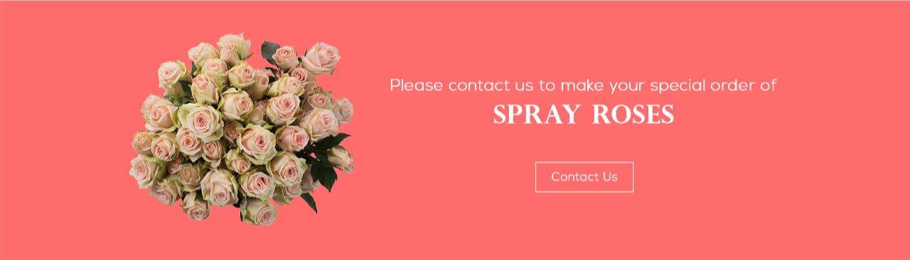 Bellevue Spray Roses