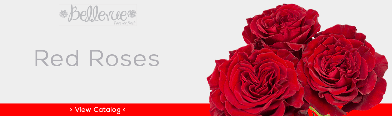 Red Roses for M-Day