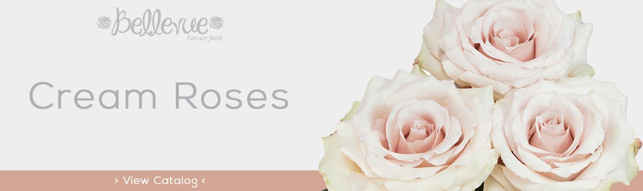 Cream Roses Bellevue