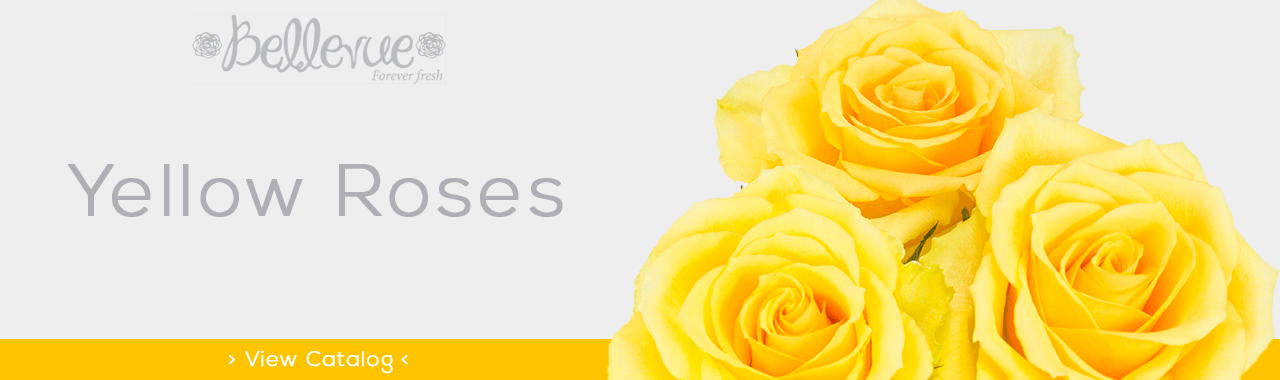 Yellow Roses for M-Day